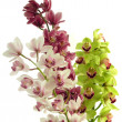 Stock Photo: Posy of multicolor orchids