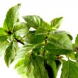 Mint herb — Stock Photo #7503909