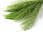 Horsetail herb — Stockfoto