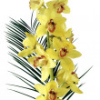 Yellow orchid and palm leaf — Stock Photo #7527291