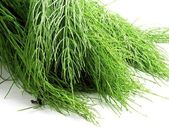 Green fresh horsetail herb — Stock Photo