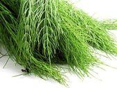 Green fresh horsetail herb — Stock Photo