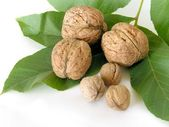 Small and big walnuts — Stock Photo