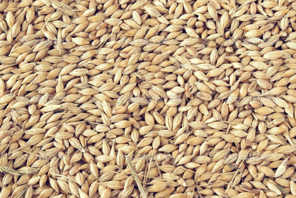 Barley seeds — Stock Photo #7525805