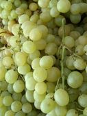 Clusters of white grapes — Stock Photo