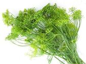 Bunch of dill for souring cucumbers — Stock Photo