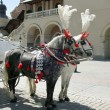 Traditional horse cab in Krakow - Stock Photo