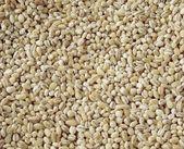 Hulled barley close up — Stock Photo