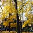 Gold trees in park in Poland — Stock Photo
