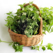 Dead nettle herb in basket - Stock Photo