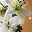 White lilies — Stock Photo #7806575