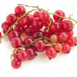 Clusters of red currant fruits — Stock Photo