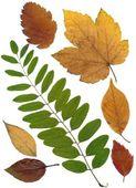 Multicolor Herfstbladeren — Stockfoto