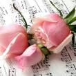 Stock Photo: Pink roses and melody