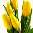 Stock Photo: Posy of yellow tulips