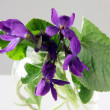 Stock Photo: Posy of sweet-violets