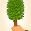 Human hand holds protect tree — Stock Photo