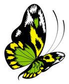 Tropische vlinder — Stockvector