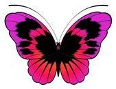 Mariposas tropicales — Vector de stock