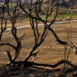 Panoramic burned Landscape — Stock Photo