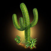 Cactus desert plant — Stock Photo