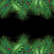 Pine branches with holly — Stock Photo