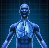 人类呼吸系统 — 图库照片
