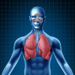 Постер, плакат: Human sinus and respiratory system