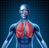 Human sinus and respiratory system — Stock Photo