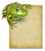 Frog with blank grunge old paper sign — Stock Photo