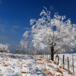 Snow covered tree - Stock Photo