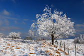 Schnee bedeckte Baum — Stockfoto