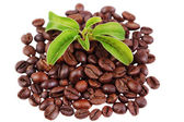 Green plant in a pile of coffee beans — Stock Photo