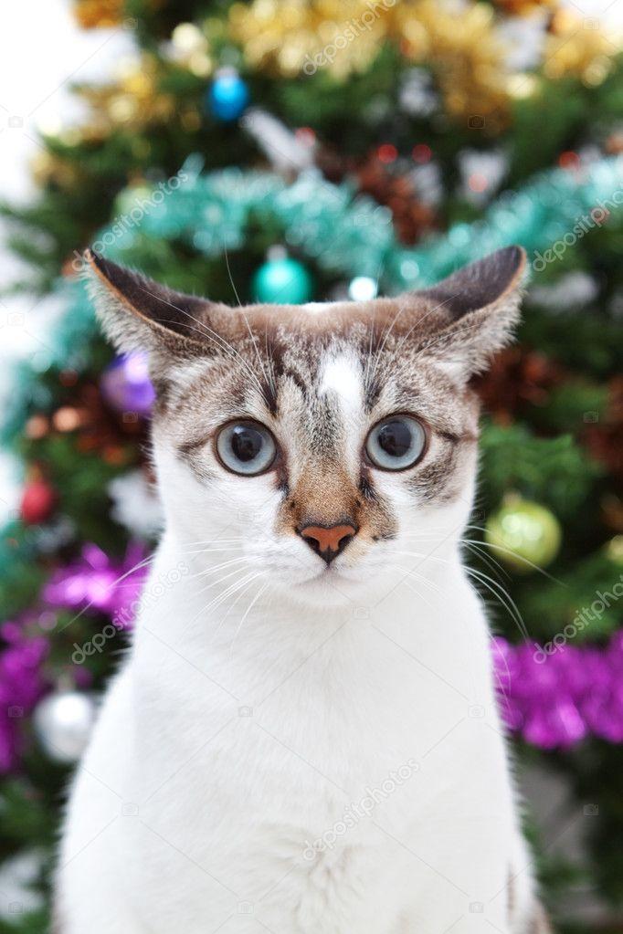 大眼睛的猫 - 图库图片