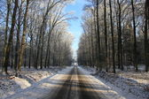 Empty road through a forest in winter — Stock Photo