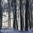Forest in wintertime with beautiful sunbeams through the trees. — Stock Photo