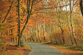 Road in a forest in autumn — Stock Photo