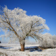 图库照片: Tree covered with ice in winter landscape