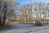 Landscape in wintertime — Stock Photo