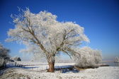 Tree covered with ice in a winter landscape — Stock Photo