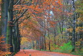 Forestroad in fall — Stock Photo