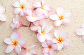 Frangipani flowers on beach — Stock Photo