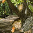 Stock Photo: Steps at PlitvickJezer- Plitvice