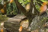 шаги на плитвицкие озёра - плитвицкие озёра — Стоковое фото
