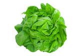 Lettuce - Salad — Stock Photo