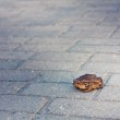 Toad on gray tiled floor — Stock Photo #7657873