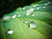 Krople wody na świeży liść zielony — Zdjęcie stockowe