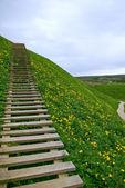对天空的阶梯 — 图库照片