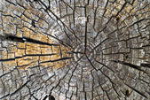 Old Tree Rings — Stock Photo