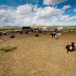 Goats on steppes — Stock Photo #7364794